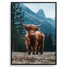 Highland Cow Poster wallsticker
