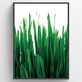 Grass - poster wallsticker