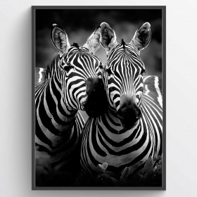 Zebra couple - poster wallsticker