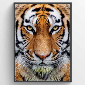 Tiger - poster wallsticker