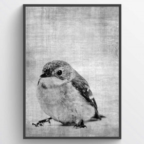 Texture bird - poster wallsticker