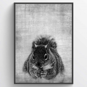 Texture squirrel - poster wallsticker