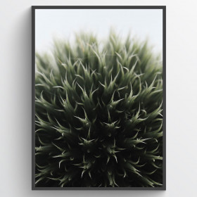 Ball plant closeup - poster wallsticker