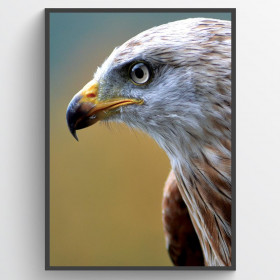 Eagle - poster wallsticker