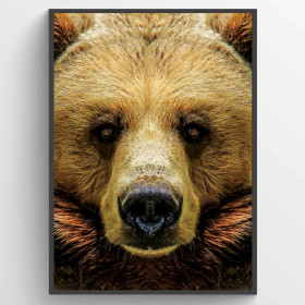 Bear - poster wallsticker