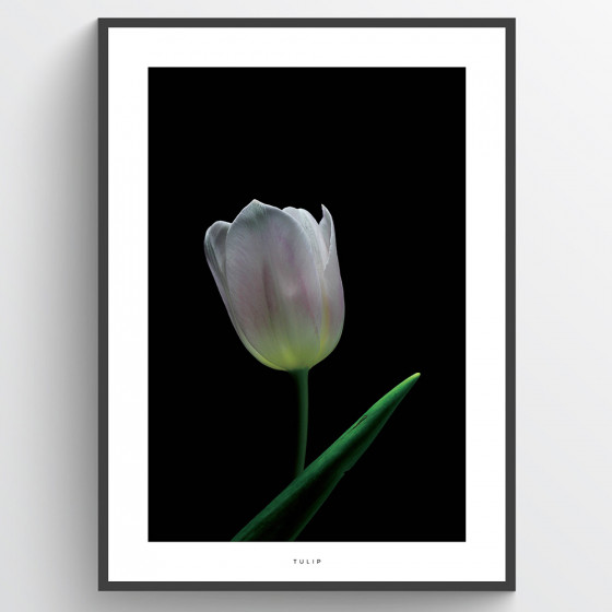 White tulip poster wallsticker