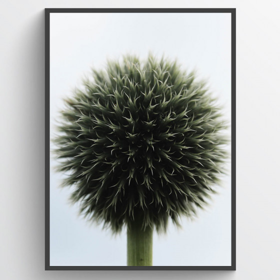 Ball plant poster wallsticker