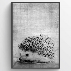 Texture hedgehog - poster wallsticker