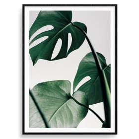 Monstera plant - poster wallsticker