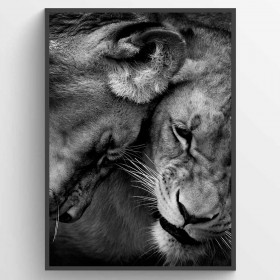 Lion couple - poster wallsticker