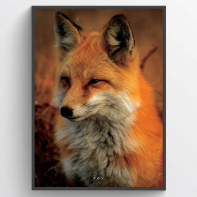 Fox - poster wallsticker